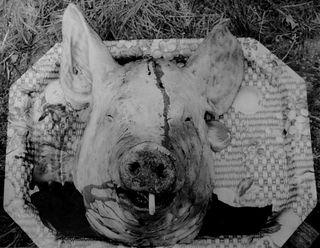 © Daniel Fernandez tete de cochon de fumeur