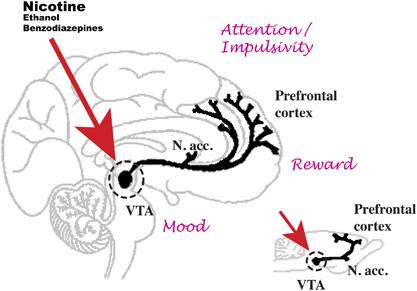 Dopamine dans le cerveau
